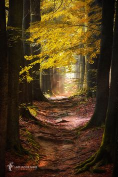 ~~Path for the Mystic | magical path through a autumn forest | by Lars van de Goor~~