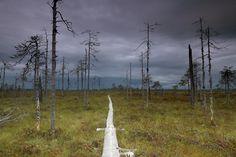 Path in a bog in South Finland