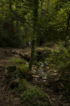 Viladrau es famosa per la seva aigua, el 50% de l'aigua embotellada de tota Espanya prové del Montseny. En els camins i senders dels boscos és freqüent ensopegar amb alguna font senyalada o amb d'altres naturals, ja que hi ha 202 fonts comptabilitzades a la localitat, el mateix passa amb les petites rieres.