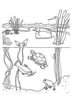 Pond Animals Coloring Pages. 20 Pond Animals Coloring Pages. Jan Brett Free Mossy Coloring Page Lily Pad Pond so Camping Coloring Pages, Frog Coloring Pages, Farm Animal Coloring Pages, Free Coloring Sheets, Fairy Coloring, Free Printable Coloring Pages, Coloring Books, Pond Animals, Water Animals