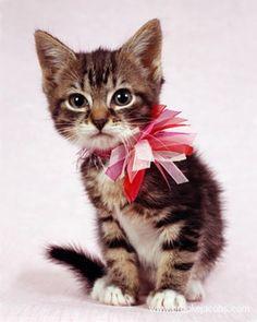 Kitten from BARC Shelter, Brooklyn