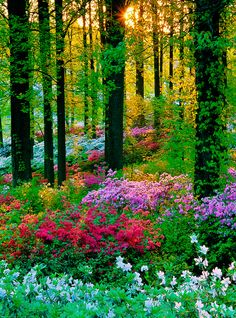 """coiour-my-world: """"nature's colourful glory """""""