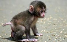 Image result for monkey