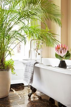 One of the cheapest and best ways to liven up your condo bathroom is by adding plants. Here, we give you 11 best plants for your condo bathroom. Condo Bathroom, Master Bathroom, Bathroom Ideas, Neutral Bathroom, Master Bedrooms, Bathroom Remodeling, Small Bathroom, New York Townhouse, Claw Foot Bath