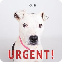 SUPER URGENT! NO INTEREST! American Pit Bull Terrier Mix Dog for adoption in Decatur, Georgia - Cassi. With no interest in Cassi she may be killed very soon.