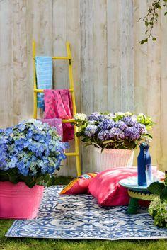 Farbenfröhlicher Mix mit Hortensien #pflanzenfreude