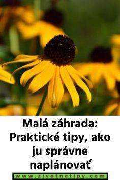 Malá záhrada: Praktické tipy, ako ju správne naplánovať Flowers, Plants, Suitcase, Flora, Plant, Royal Icing Flowers, Flower, Florals, Bloemen