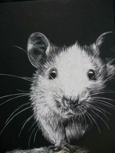 Caring for Your Pet Mouse - Annika L. - Caring for Your Pet Mouse for my future mousey babies! Animals And Pets, Cute Animals, Scratchboard Art, Fancy Rat, Illustration Techniques, Scratch Art, Cute Rats, Pet Mice, Rodents