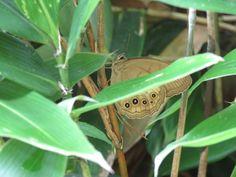 a butterfly. 7 July 2016.