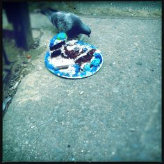 PROJECT 365: Day 35 - Dec. 22, 2012  New York - West Village Street.  I saw this lone pigeon eating a birthday cake.