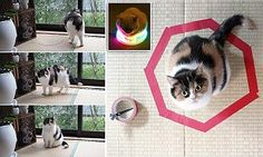 Why did the cat sit in the circle?  One trick that all pet can do #DailyMail