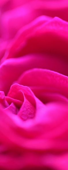 Free Colorful Pink Romantic Rose Petals Creative Commons Unedited By Pink Sherbet Photography Pink Love, Bright Pink, Red And Pink, Pretty In Pink, Pink Purple, Hot Pink, Pretty Flowers, Magenta, Rose Fushia