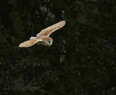 Photo Barn Owl by Andy Howe on 500px