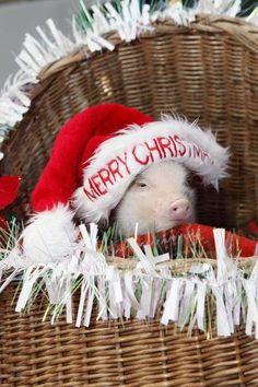 Christmas piggy