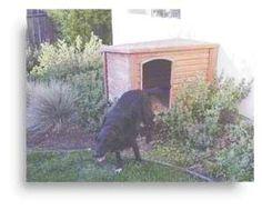 Build 2 Separate Dog Houses Back To Back W/separate Doors U0026 Indoor Kennels