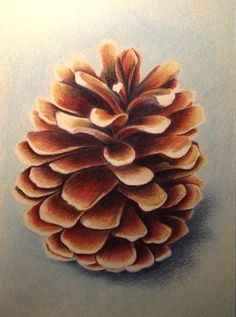 Pine Cone - color pencil More Colored Pencil Artwork, Pencil Painting, Coloured Pencils, Color Pencil Art, Painting & Drawing, Realistic Drawings, Colorful Drawings, Art Drawings Sketches, Horse Drawings
