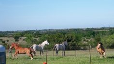 I was taking photo of my horses and seen the view from my back porch Yuralee Raines