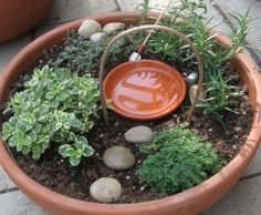 Fairy Herb Garden: those little saucers hold just enough water for bees and butterflies to drink (that's a good thing)