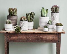 Kaktus - mye mer enn bare pigger