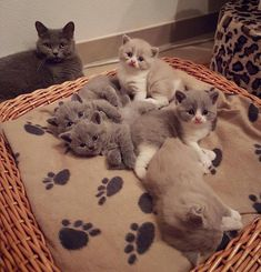 2 RESCUE CAT MOMS FOUND CLUTCHED TOGETHER WITH 8 KITTENS BORN JUST DAYS APART