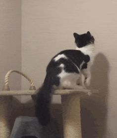 A secret entrance to the cat dimension