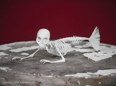 This is a digitally sculpted, 3D printed replica of a Fiji Mermaid Skeleton. It measures 7 inches long by 2.42 inches wide by 2.24 inches