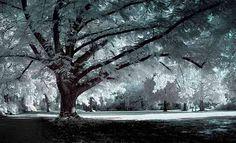 65 Ideas Beautiful Tree Photography Scenery Winter Wonderland For 2019 Tree Photography, Winter Photography, Inspiring Photography, Winter Trees, Winter Snow, Winter Scenery, Image Hd, I Love Winter, Modern Metropolis