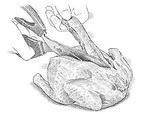 Herb-Roasted Cornish Game Hens Recipe - Cook's Illustrated