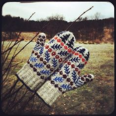 The Taxus Mittens are inspired by a tiny chart in the book Selbuvotter by Anne Bårdsgård. The mitten pattern is also in English, and this pair is in Jamieson's of Shetland, Spindrift. #nordiskdesign #norskdesign #museumsforlaget #selbuvotter #mittens #votter #vottenebarlind #thetaxusmittens #barlind #wool #ull #woollove #spindrift #jamiesonsofshetlandspindrift #pinneguridesign