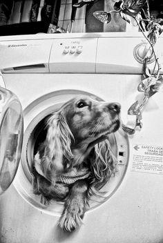 Taking a Bath #dog #pet #puppy
