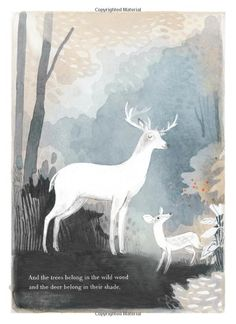 You Belong Here: M.H. Clark, Isabelle Arsenault: 9781938298998: Amazon.com: Books