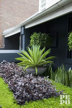 Courtyard garden with built in BBQ Woollahra Eastern Suburbs