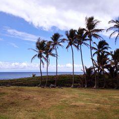 Haliimaile is an area between Makawao and Paia on…