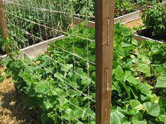 DIY Raised Bed Trellis - Vegetable Gardener Would be good for annual vining flowers Bean Trellis, Diy Trellis, Garden Trellis, Trellis Ideas, Building A Trellis, Raised Bed Garden Design, Garden Whimsy, Garden Structures, Garden Projects