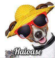 Felicitare de Paste cu oua cu flori Oakley Sunglasses, Round Sunglasses, Anul Nou, Martie, Sf, Round Frame Sunglasses