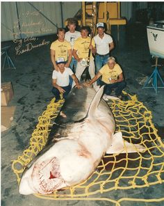 Largest Great White Shark | Frank Mundus (right) with the largest great white shark ever caught on ...