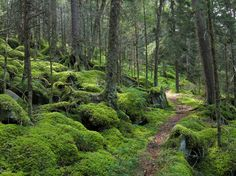 The beauty of the Forest On Baxter Creek Trail In Great Smoky Mountains National Park