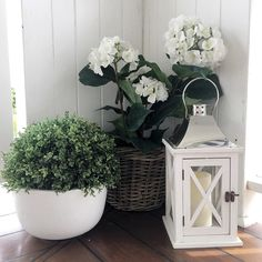Last week I thought I really need a rattan basket for the hydrangeas. One that's just the right size. On Wednesday I popped into Paddington Hardware and there was the PERFECT basket for $24. Don't you love it when that happens
