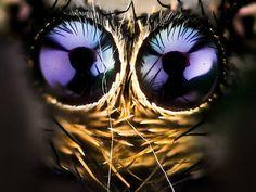 Amador fotografou momento em que mosca está coberta por gotas de orvalho