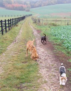 Wouldn't be complete with the mutts roaming the property.