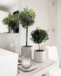 Plantinhas até no banheiro | Plants even in the bathroom  | #yaydecor #decor #deco #decoration #decoração #interior #interiores #interiors #interiordesign #designdeinteriores #home #homedecor #homedeco #plants #plantas | : nyheter24.se