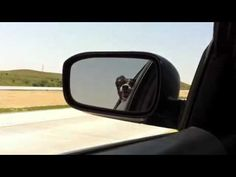 Dog tries to eat traffic...