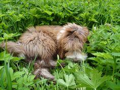 My pup Urho amongst the nature
