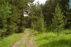 белоозёрский национальный природный парк - Поиск в Google