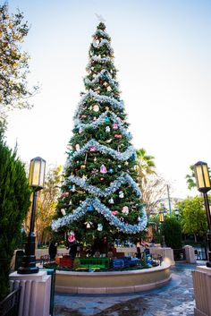 A Photo Tour of The Disneyland Resort at Christmas - The Bucket List Narratives