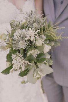 gorgeous white thistle