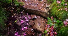 2015 Bucket List - Rhododendron petals on the Grassy Ridge Trail, North Carolina-Tennessee border. (Photo by Sharon Canter)