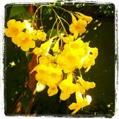 Minha casa anda tão florida... - @fabilage- #webstagram