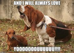 basset hound meme i love you