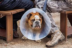 Arnhel de Serra National Trust, Dogs, Photography, Animals, Art, Chop Saw, Art Background, Photograph, Animales